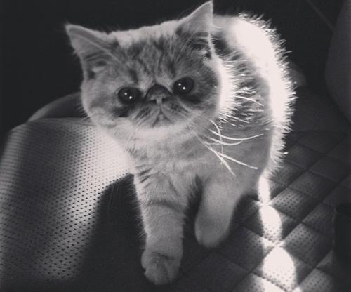 justin-beiber-cat-3.jpg