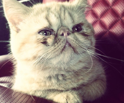 justin-bieber-cat-1.jpg