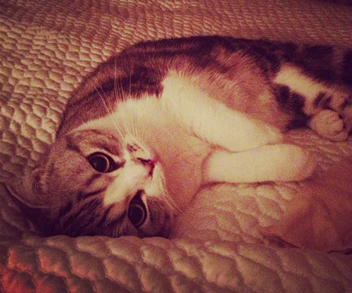 taylor-swift-cat-1.jpg